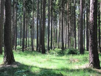 Klánovický les