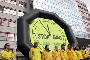 Evropská unie povolila kukuřici s toxickými účinky
