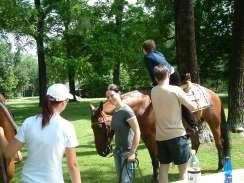 Pohled na výstavu z hřbetu koně