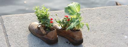 Květiny v botách Foto: informuji.cz