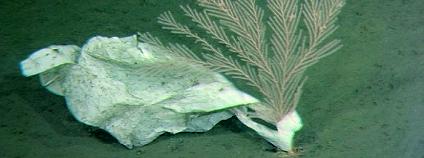 Foto: Deep-sea Debris