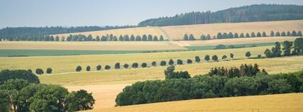 200 kilometrů alejí na Podblanicku Foto: Adapterra Awards/Nadace Partnerství
