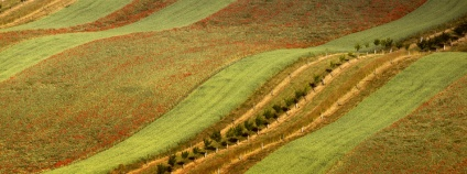 Malebně zvlněnou krajinu plnou dlouhých lánů na Kyjovsku mají fotografové sice rádi, ve skutečnosti jsou však v Moravském Toskánsku vidět právě ty nesprávné zemědělské praktiky. Myslí si to zemědělec Petr Marada, který v této oblasti hospodaří na 70 hektarech pozemků.