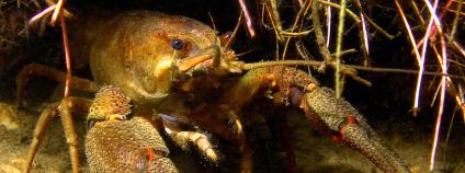 Foto: Agentura ochrany přírody a krajiny