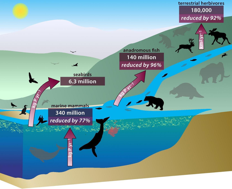 Nákres ukazuje propojení světa zvířat a přenost živin mezi jednotlivými jeho sférami.