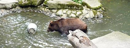 Medvěd v Českém Krumlově Foto: Aleš Makovec Wikimedia Commons