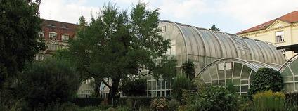 Botanická zahrada Přírodovědecké fakulty Masarykovy univerzity v Brně- skleníky Foto:  Mercy Wikimedia Commons