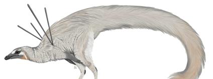 Ubirajara jubatus Foto: Luxquine Wikimedia Commons