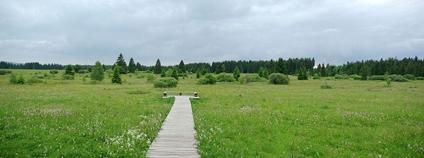 Úpolínová louka na Chebsku Foto: Elingr Zbyněk Wikimedia Commons