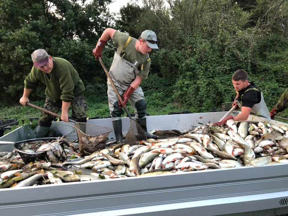 Chyba způsobila, že kraje nemohou rybářům proplatit náklady na kafilérii. Přestože na to mají speciální účet
