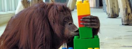 foto: Zoo Vienna / facebook.com