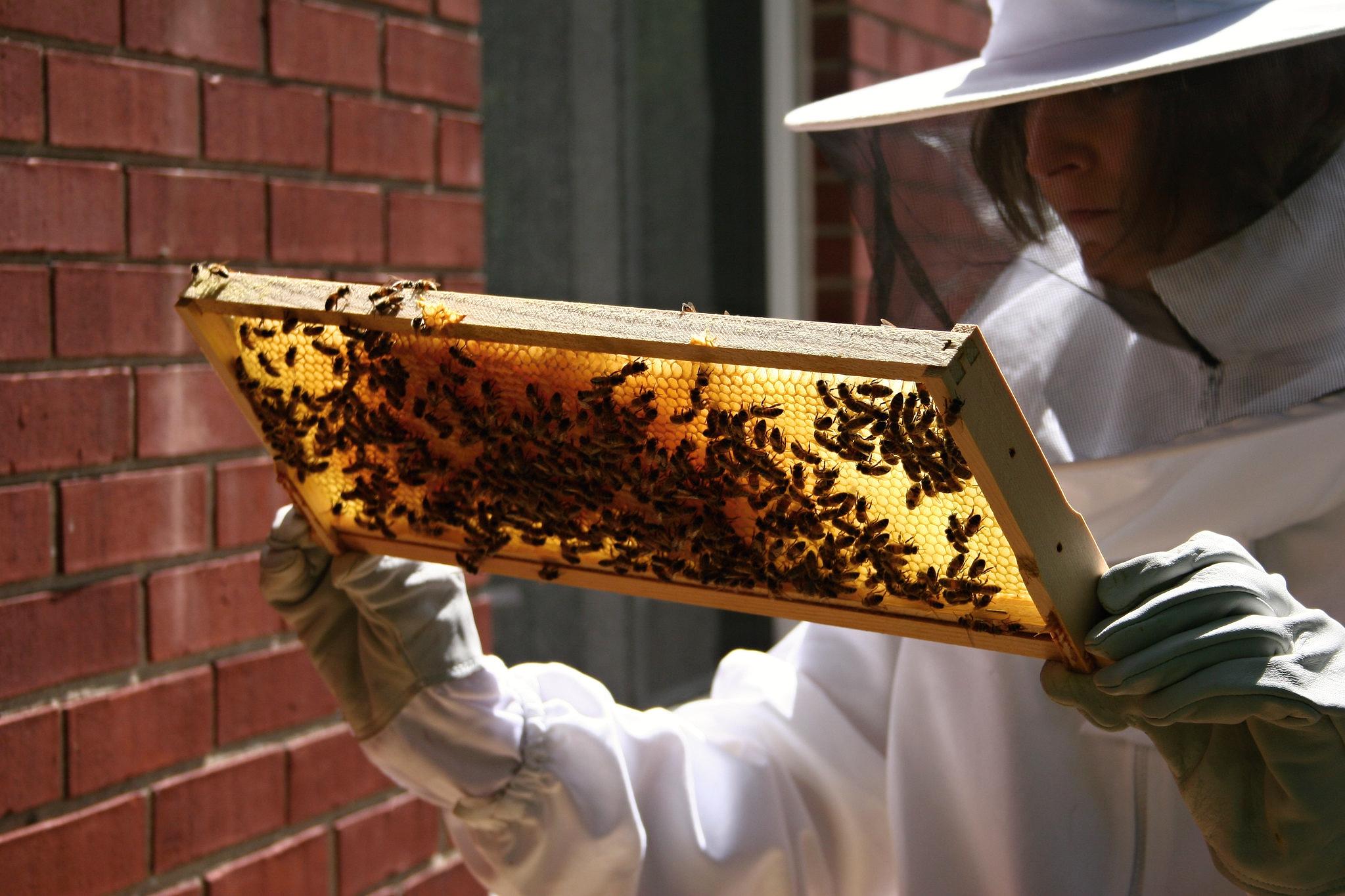 Zlínský kraj letos rozdělí mezi 123 včelařů téměř 1,2 milionu Kč