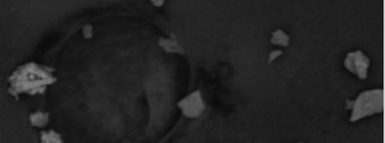 foto: dustparticleatlas.gli.cas