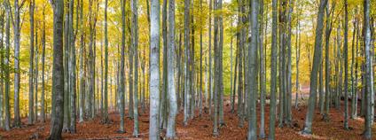 Vytěžené stromy nad zámkem Jezeří a lomem ČSA. Foto: Petr Zewlakk vrabec / Greenpeace
