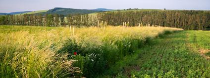 Zatravněný kvetoucí pás mezi poli na Zálučí u vesnice Blatnička, pozemky Martina Smetany.