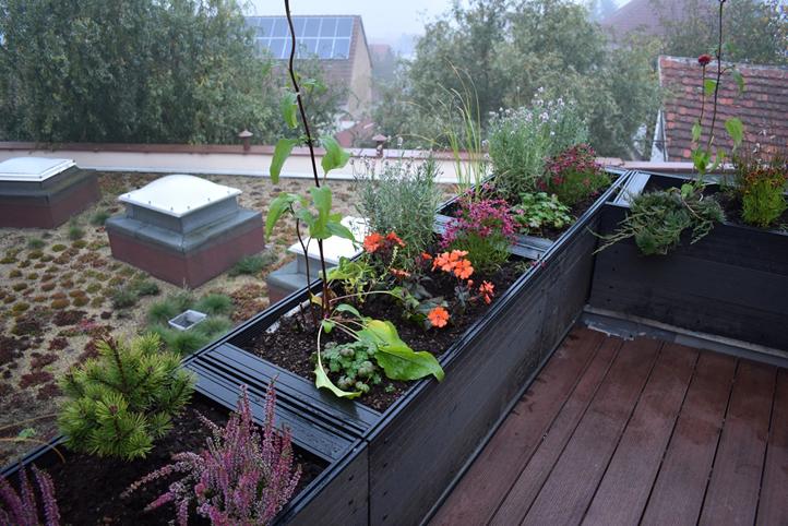Další z plzeňských základních škol by mohla dostat zelenou střechu. / Ilustrační foto