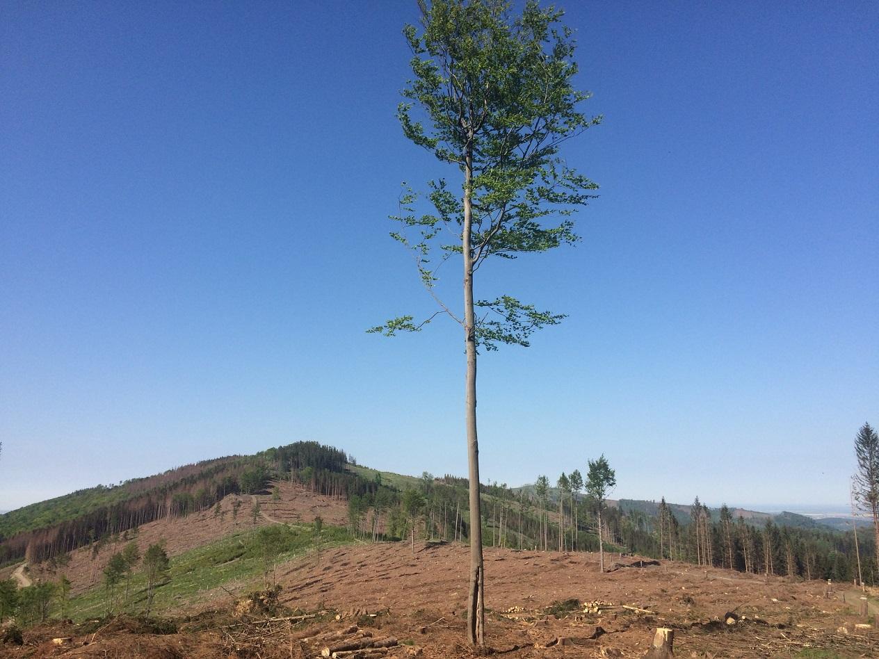 Rozpad smrkového lesa, který neodolal suchu a kůrovcům.