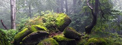 Foto: Peter Mayer / Nadace Ivana Dejmala pro ochranu přírody