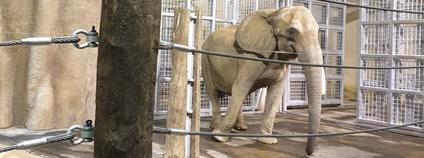 Safari park má novou slonici z Vídně Foto: Zuzana Boučková Safari Park Dvůr Králové