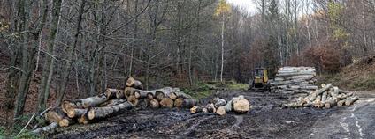 Kácení bučin v Horním Jiřetíně Foto: Petr Zewlakk Greenpeace