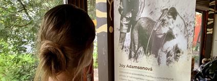Safari park Dvůr vystavuje ilustrace Joy Adamsonové Foto: Michal Šťastný/Safari Pak Dvůr Králové