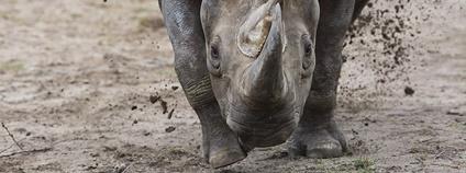 Safari park přišel o rekordmanku Jessi v počtu odchovaných mláďat Foto: Lukáš Pavlačík Safari Park Dvůr Králové