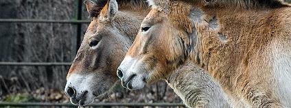 foto: Petr Hamerník / Zoo Praha