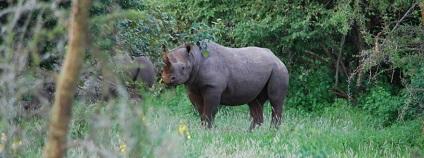 foto: Safari Park Dvůr Králové