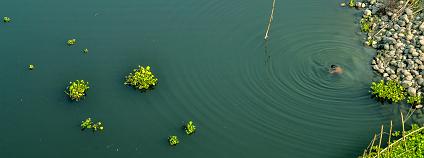 Foto: Topu Saha / Flickr