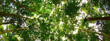 amazonský prales Foto: Torrenegra Flickr