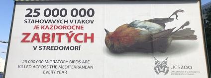 Pět billboardů upozorňujících na masakry tažných ptáků ve Středomoří je umístěno v Bratislavě: na Ivanské cestě, u výjezdu z letiště, na Bajkalské a Vanorské ulici a na Trnavském mýtě.