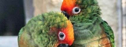foto: Papouščí zoologická zahrada
