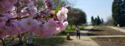 foto: Botanická zahrada Praha