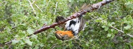 foto: LPO (Ligue pour la Protection des Oiseaux)
