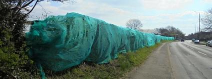 Foto: Joanne Swann / Nesting not Netting!
