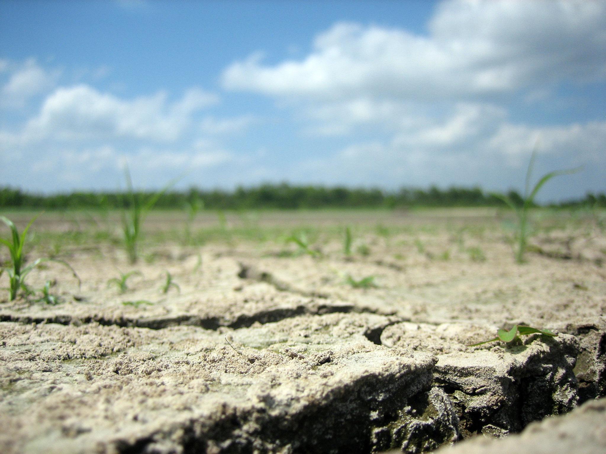 STAN shání podpisy na mimořádnou schůzi Poslanecké sněmovny k otázce sucha