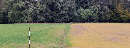 """Pole, jehož pravou část si pan zemědělec """"pro zjednodušení života"""" hezky vystříkal roundupem, namísto aby to zaoral zelené tak jako stovky generací našich předků. Takové zvěrstvo a přitom denní praxe na našich polích - pro pár stokorun úspory."""