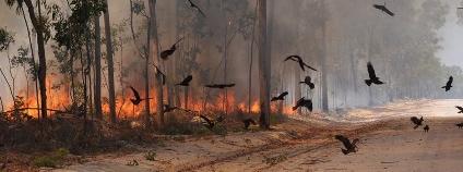 Foto: Dick Eussen / sciencealert.com