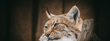 foto: Zoopark Chomutov / facebook.com
