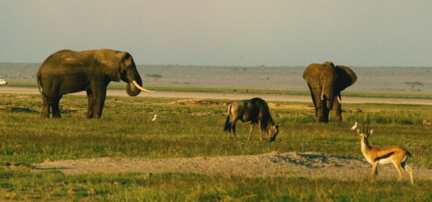 Keňa zahajuje první sčítání divoce žijících zvířat na svém území