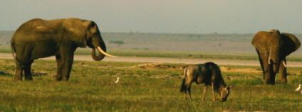 Africký park Amboseli v Keni. Foto: Nicolas Barcet Wikimedia Commons