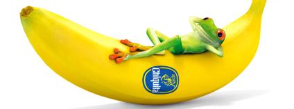 Žabička na banánu Chiquita demonstruje šetrnost firmy k ŽP. Zdroj: Chiquita