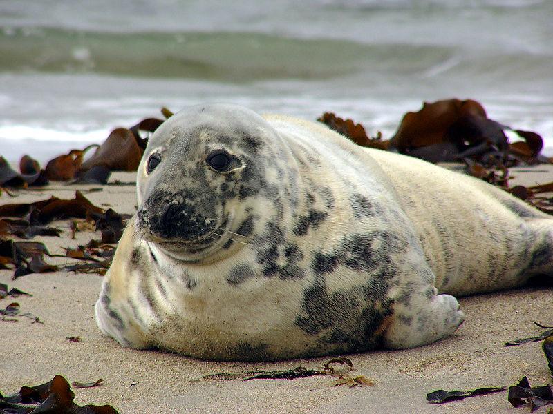 Tuleni rozvířili v Americe debatu, mnozí je považují za škodnou
