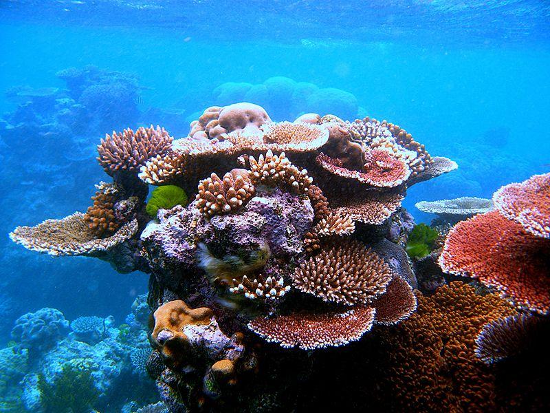 Se táhne v délce 2000 km nedaleko východního pobřeží austrálie