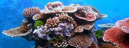 Pro Středoevropana je mimořádně zajímavý Velký bariérový útes, který se táhne v délce 2000 km nedaleko východního pobřeží Austrálie. Z Cairns k němu jezdí četné turistické lodě, na kterých vám ochotně zapůjčí vybavení na šnorchlování nebo potápění. Na snímku útes Flynn, součást Velkého korálového útesu u Cairns