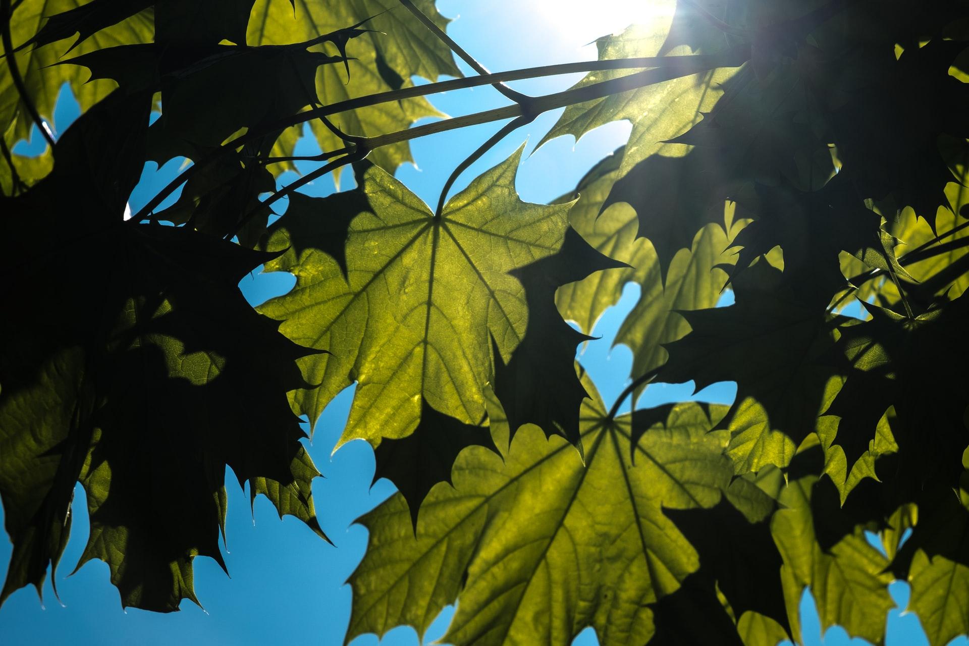 Radnice Prahy 2 nechá vysadit na pět desítek chybějících stromů