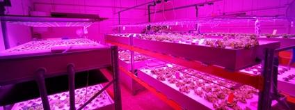 Akvaponická farma firmy Flenexa Foto: Flenexa