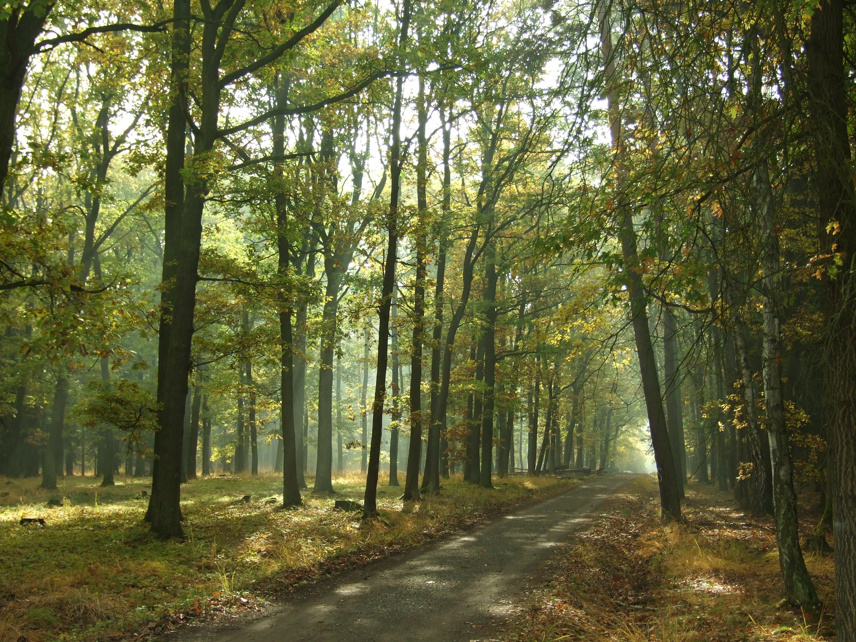 Cesta Klánovickým lesem
