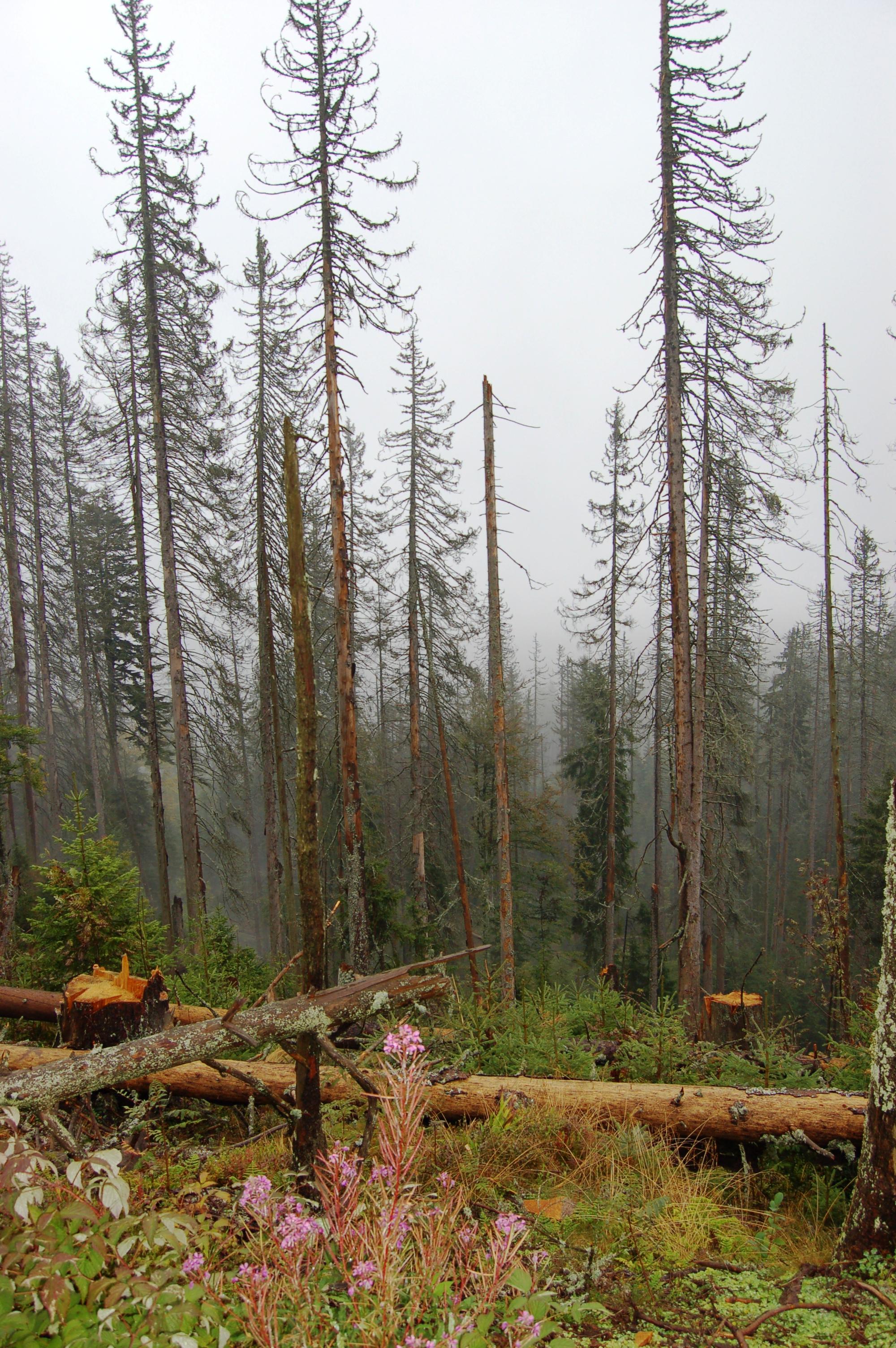 Šumavský les u Trojmezí