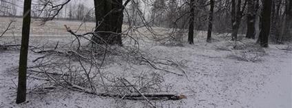 Poškození lipové aleje na Uhlířský vrch v Bruntále